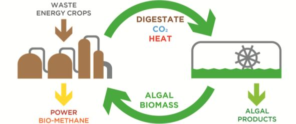 algaebiogas process